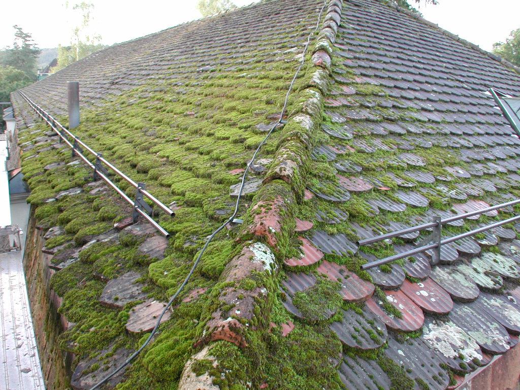 Geliebte Richtpreise für die Dachreinigung (ganze CH) #MY_17
